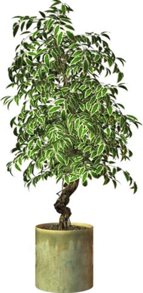 Essay On Tree Plantation In School District